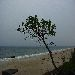 tree_beach_surf